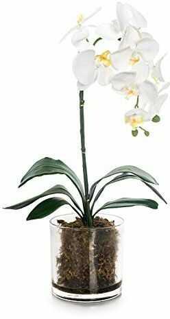 EUROCINSA Ref.86044C01 szafa na orchidei PHALAENOPSIS, 1 sztuka, tworzywo sztuczne, szkło, 31 x 56 cm, biała