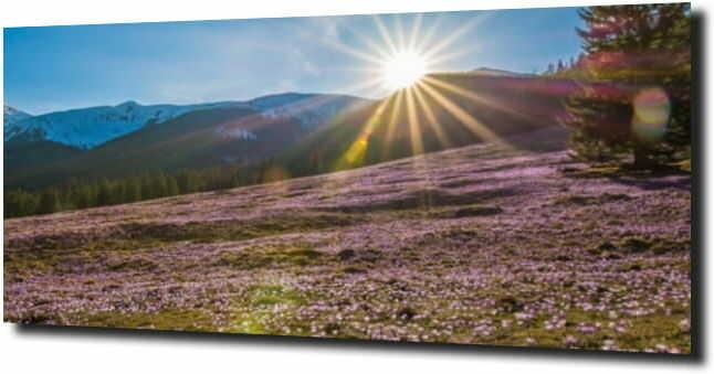 obraz na szkle Krokusy na polanie w Tatrach