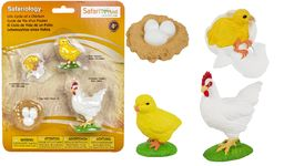 Safari Life Cycle Of A Chicken