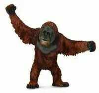 Orangutan - Collecta