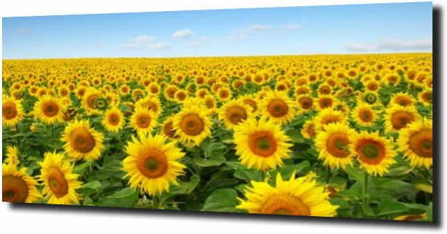 obraz na szkle, panel szklany Słoneczniki 9