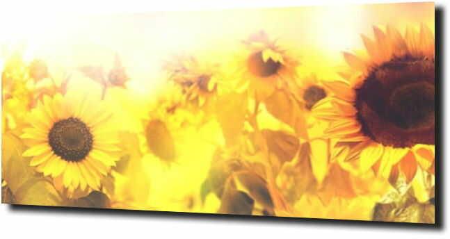 obraz na szkle, panel szklany Słonecznik 24