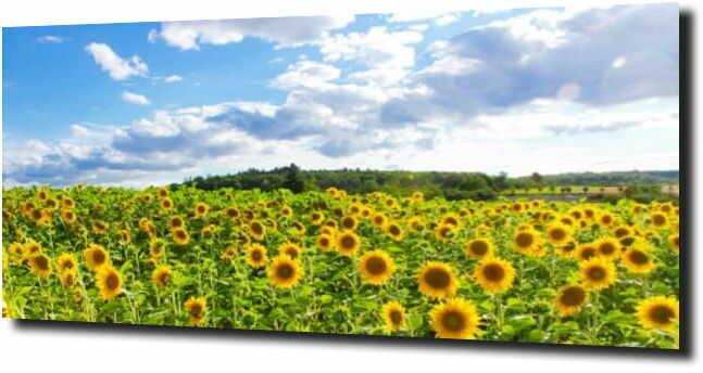 obraz na szkle, panel szklany Słonecznik 26
