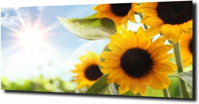 obraz na szkle, panel szklany Słonecznik 70
