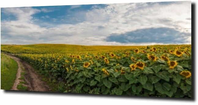 obraz na szkle, panel szklany Słonecznik 72
