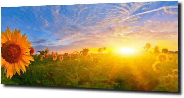 obraz na szkle, panel szklany Słonecznik 74