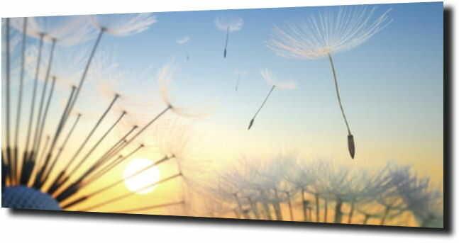 obraz na szkle, panel szklany Dmuchawce 87