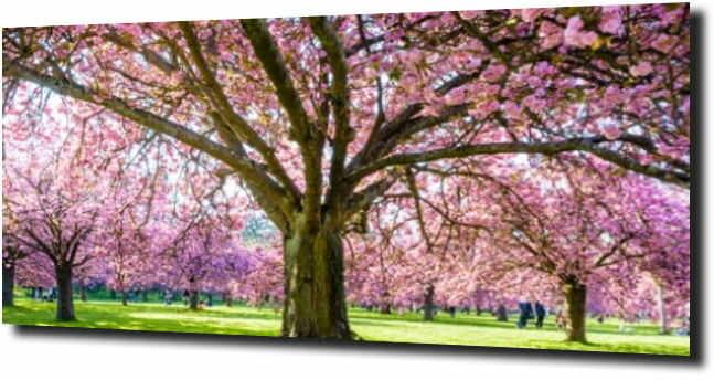 obraz na szkle, panel szklany Różowe drzewo