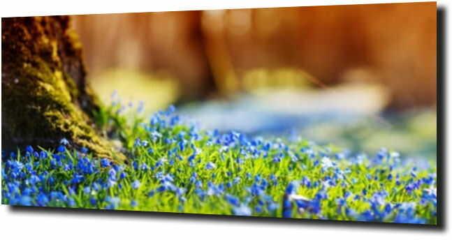 obraz na szkle, panel szklany Kwiatki polne