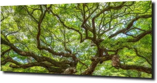 obraz na szkle, panel szklany Konary drzewa