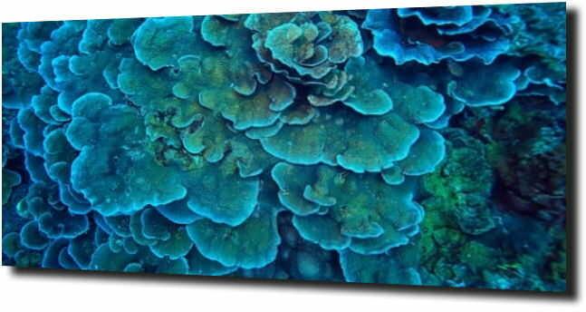 obraz na szkle, panel szklany Rafa koralowa
