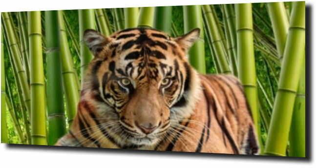 obraz na szkle, panel szklany Tygrys bambus