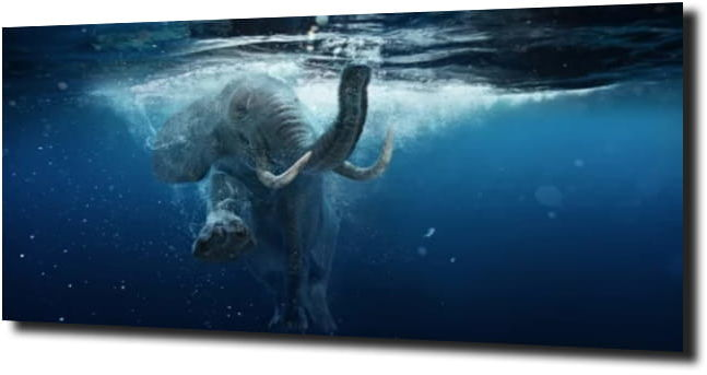 obraz na szkle, panel szklany Słoń pod wodą