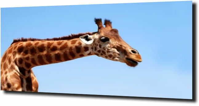 obraz na szkle, panel szklany Piękna Żyrafa