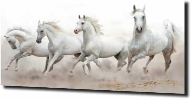 obraz na szkle, panel szklany Białe konie 2