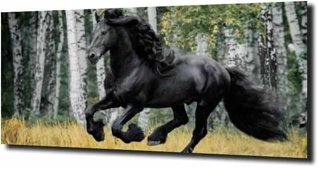 obraz na szkle, panel szklany Koń fryzyjski