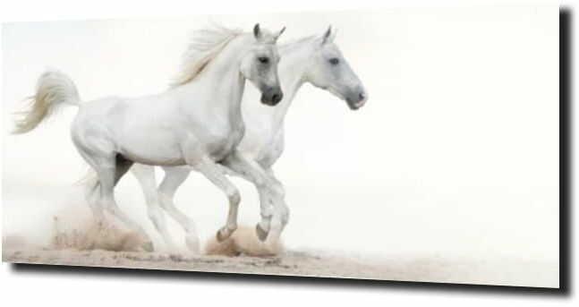obraz na szkle, panel szklany Pędzące konie