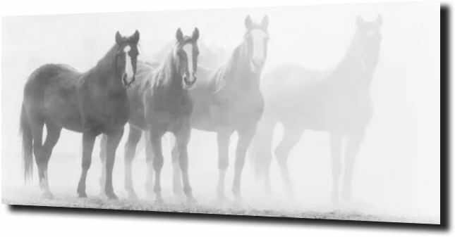 obraz na szkle, panel szklany Konie za mgłą