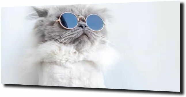 obraz na szkle, panel szklany Kotek okulary