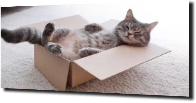 obraz na szkle, panel szklany Kot w pudełku