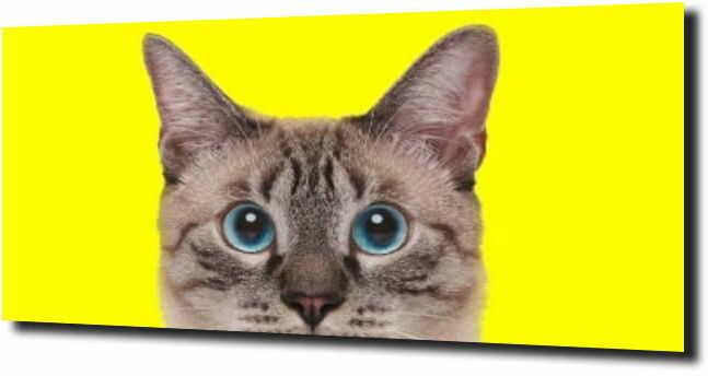 obraz na szkle, panel szklany Kot żółte tło