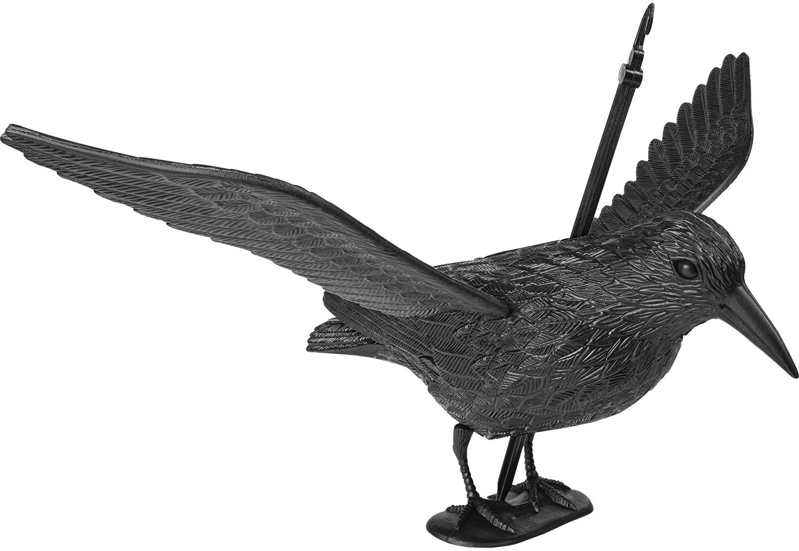 Kruk startujący - odstraszacz ptaków