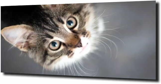 obraz na szkle, panel szklany Kotek portret