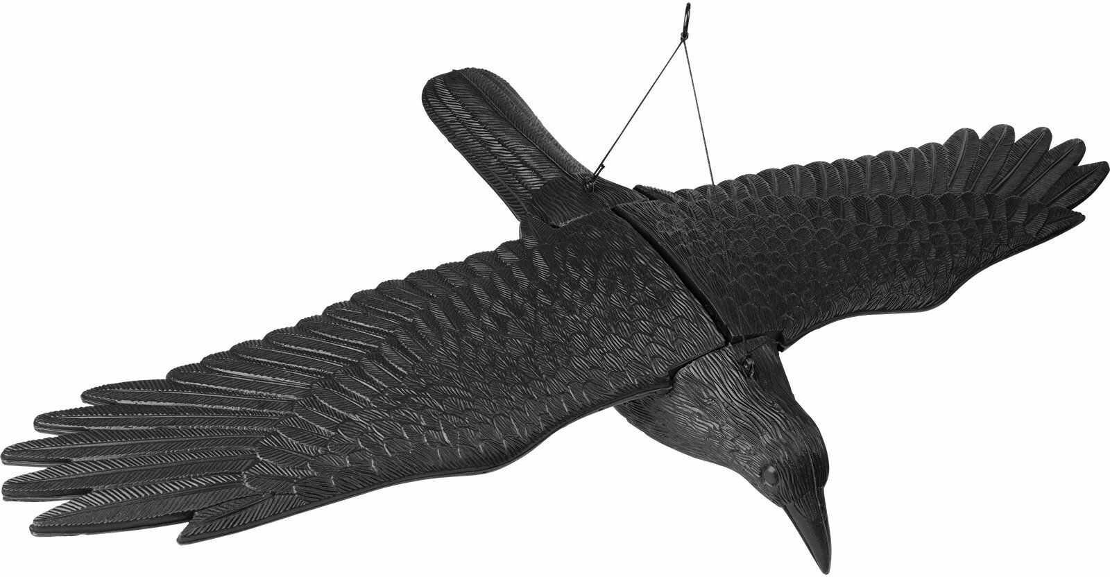 Duży kruk z rozpostartymi skrzydłami