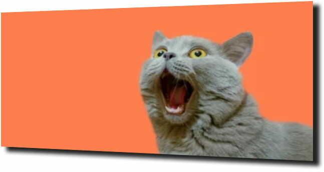 obraz na szkle, panel szklany Zdziwiony kot