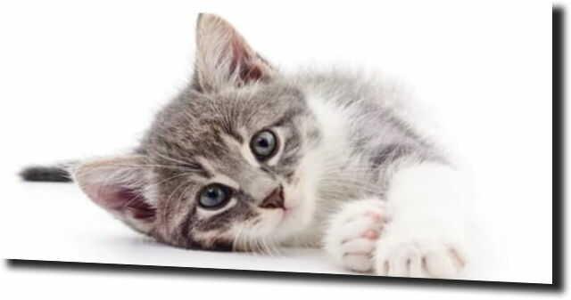 obraz na szkle, panel szklany Słodki kotek