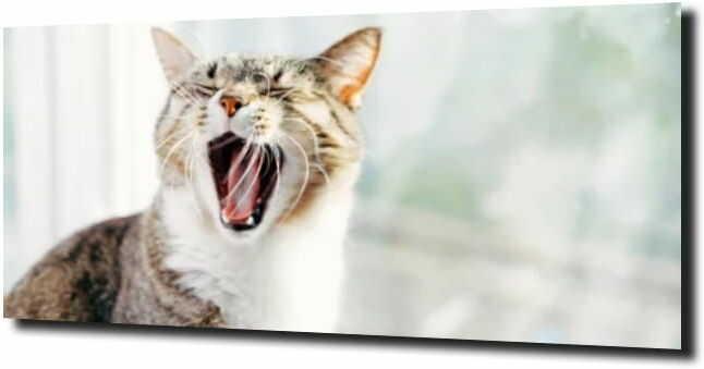 obraz na szkle, panel szklany Ziewający kot