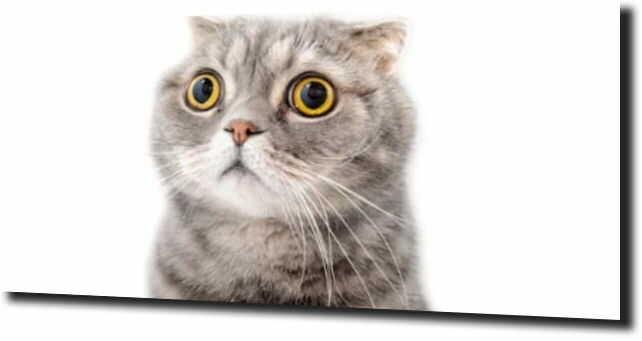 obraz na szkle, panel szklany Kot duże oczy