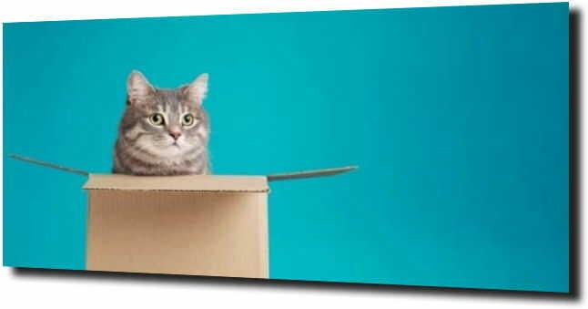 obraz na szkle Kot w pudełku niebieskie tło