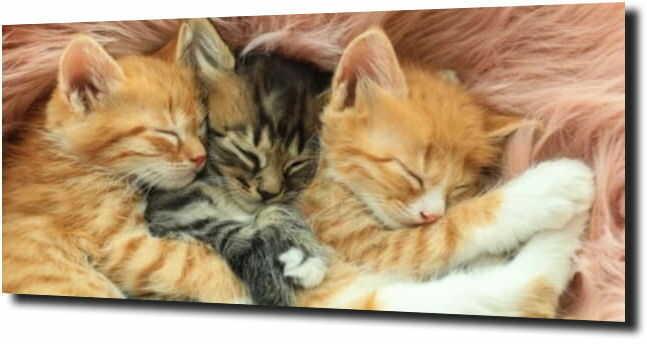 obraz na szkle Trzy koty kotki