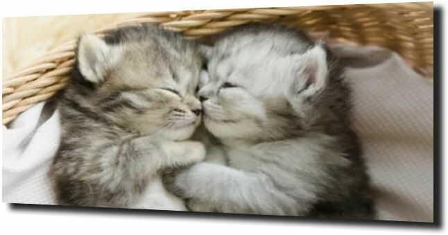 obraz na szkle Kotki małe śliczne zwierzęta