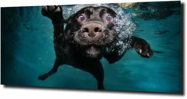 obraz na szkle, panel szklany Pies pod wodą