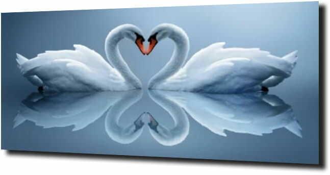 obraz na szkle, panel szklany Łabędź miłość