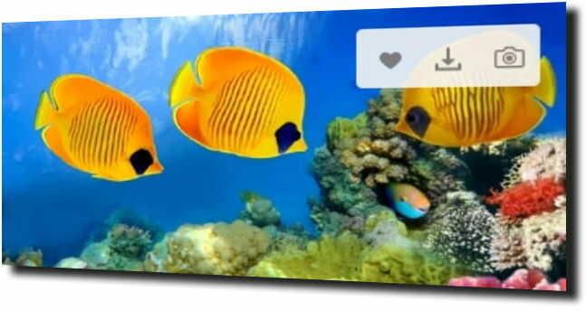 obraz na szkle, panel szklany Ryby pod wodą