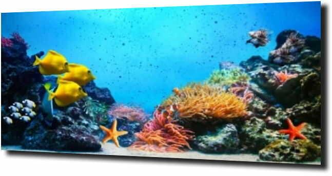 obraz na szkle Podwodny świat rafa koralowa