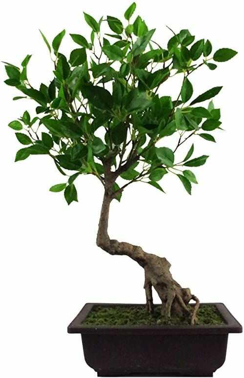 Leaf Sztuczne drzewo, Ficus Bonsai, 50 cm
