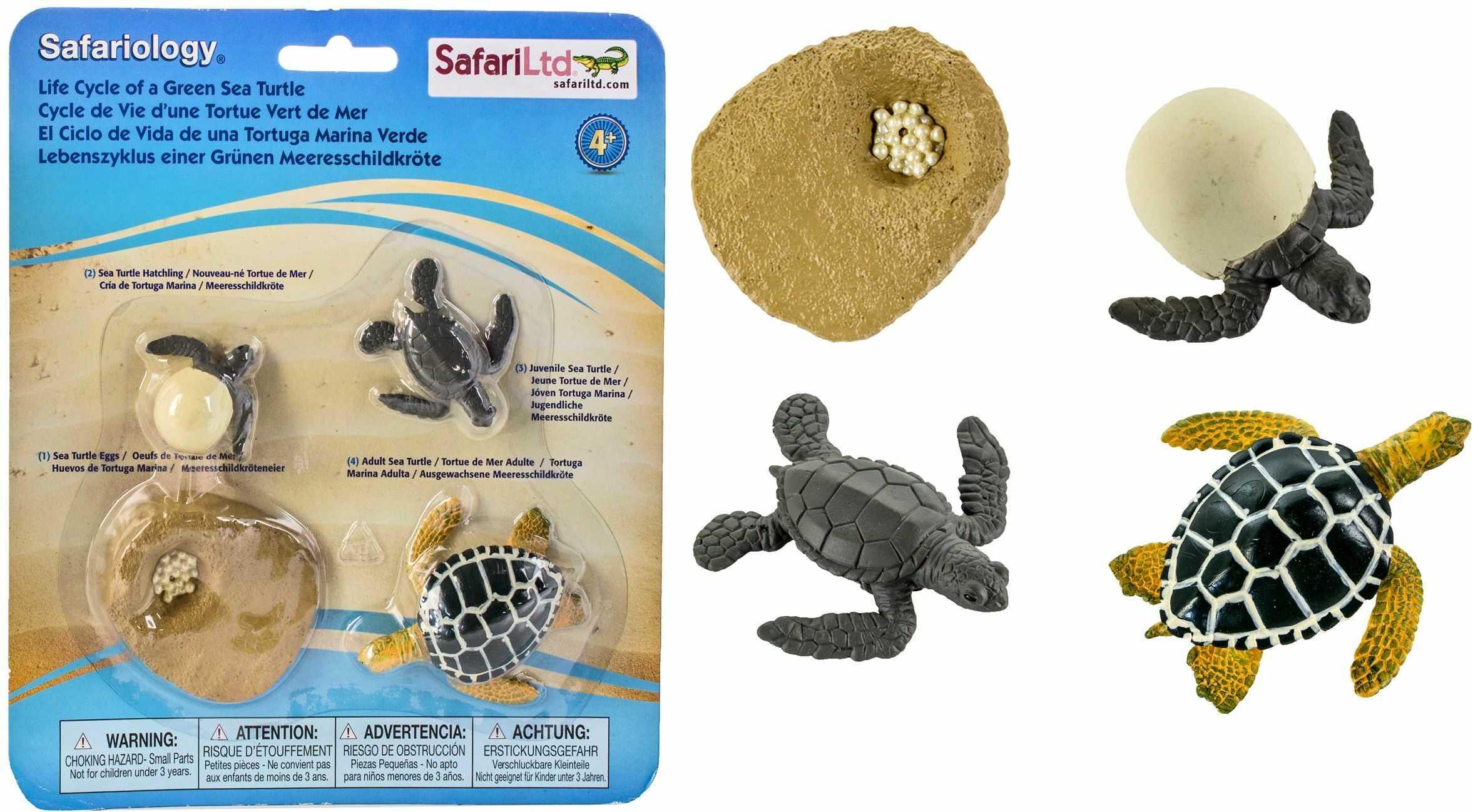 Safari 662316 Cykl życia Zielonego żółwia morskiego