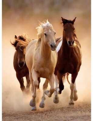 Puzzle Clementoni 1000 - HQ Biegające Konie, Running Horse