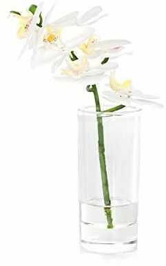 EUROCINSA Ref.86032C01 szafka na orchideę PHALAENOPSIS, 4 sztuki, tworzywo sztuczne, szkło, 13 x 27 cm, biała