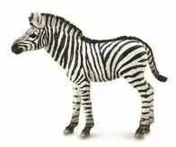 Zebra źrebię - Collecta