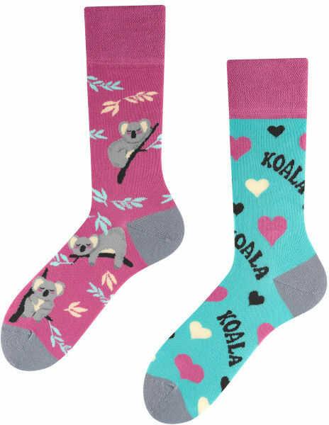 Koala, Todo Socks, Miś, Drzewa, Liście, Kolorowe Skarpety