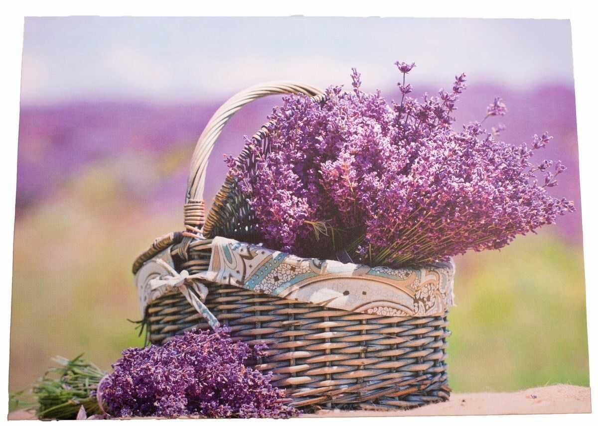 Obraz na płótnie z lawendą Provence, 30 x 40 cm