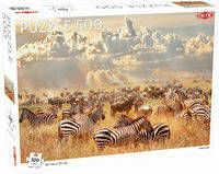 Puzzle Zebra Herd 500 elementów - Tactic