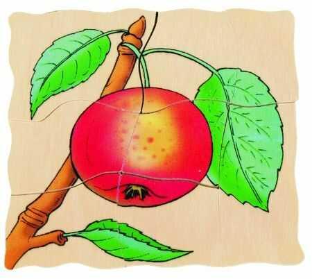 Beleduc 17039 - warstwy - puzzle jabłko
