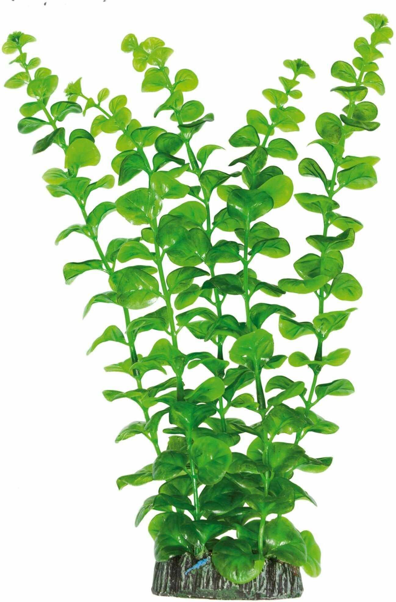 ICA AP1010 Bacopa Australis od roślin wodnych, tworzywo sztuczne