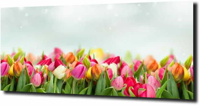 obraz na szkle, panel szklany Tulipany 11 125X50